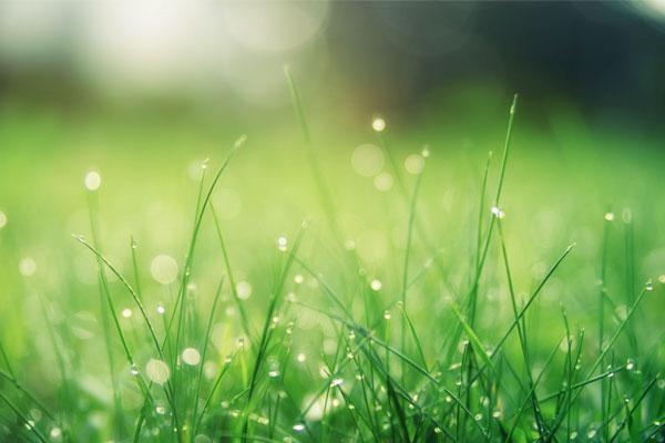 Eco-Friendly Lawn Treatment