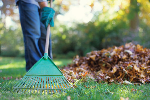 Spring & Fall Clean Up