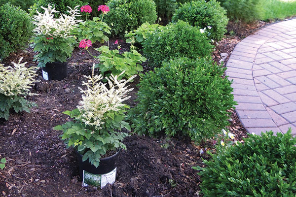 The Basics of Mulching