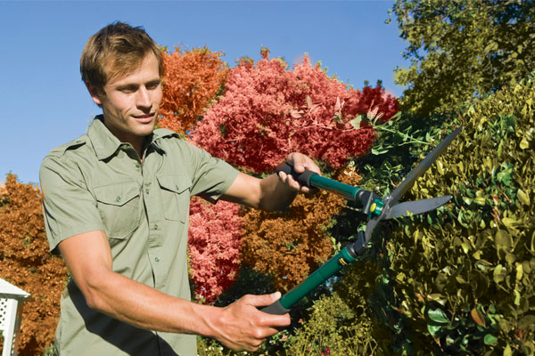 Strategies for Proper Pruning