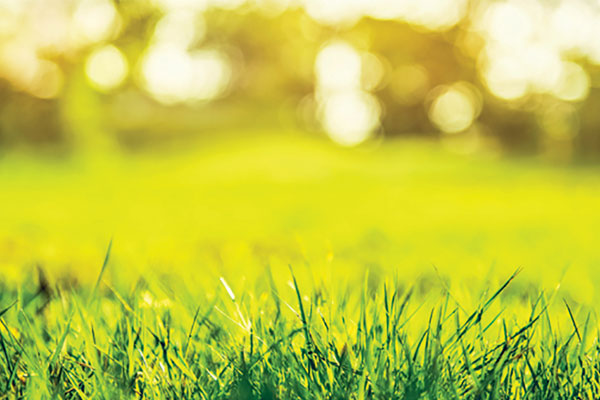 How to Control Crabgrass Before It Appears