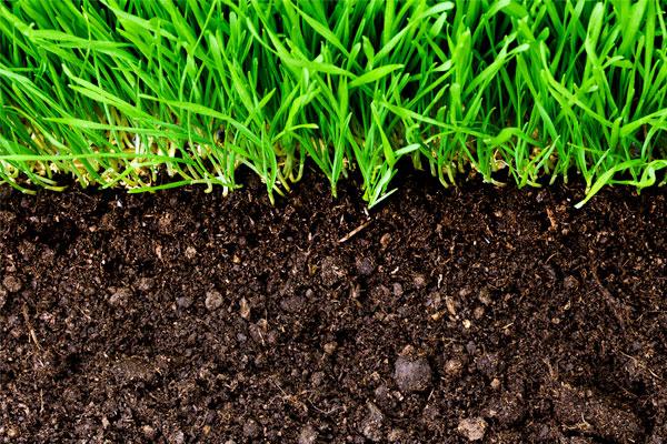 Helpful Tips for Organic Lawn Treatment