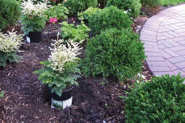 The Differences Between Organic and Inorganic Mulches
