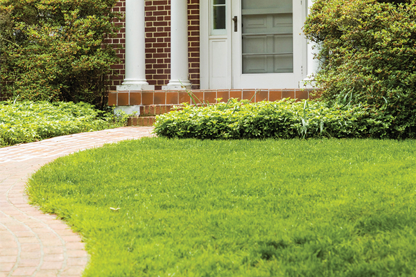 Improve Soil Quality for a Better Lawn in Greencastle, PA