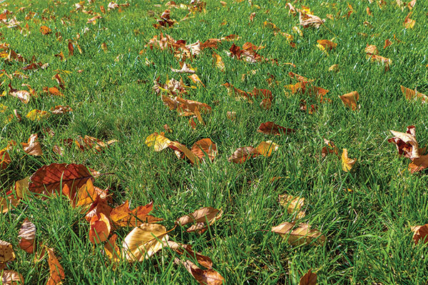 Techniques to Revitalize a Lawn After a Long Winter