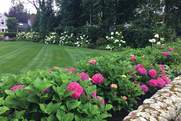 What to Know Before Planting Around Your Property